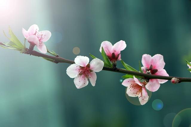 ดอกท้อ, ฮวงจุ้ยกัยรูปภาพ, ดอกไม้กับฮวงจุ้ย